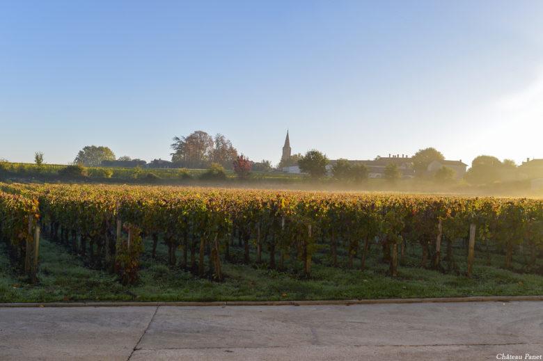 vignes automne 7_reduc