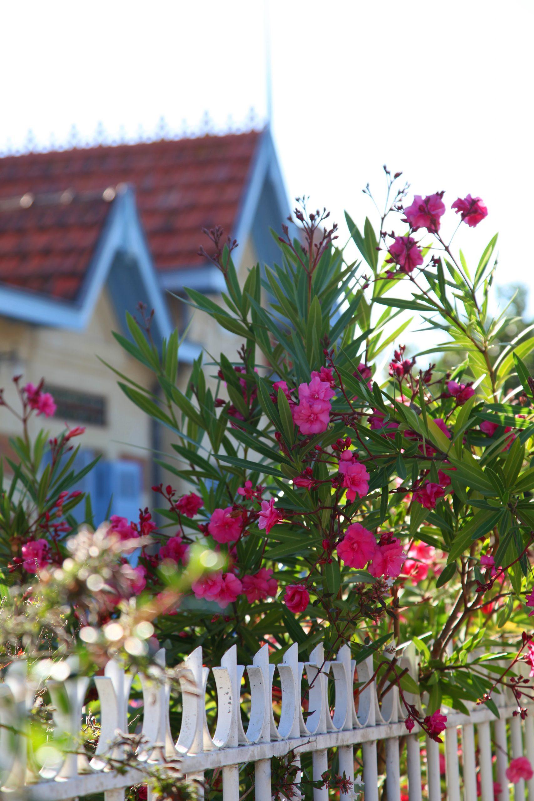villa image 3