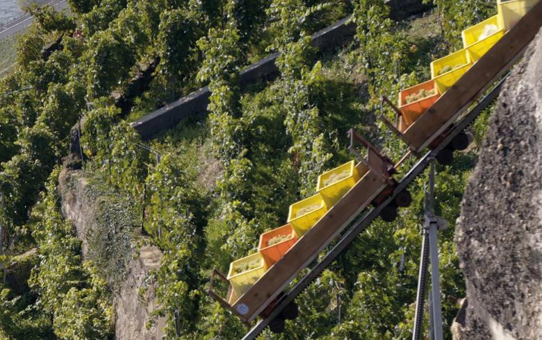 visuel-bdx-tourisme-suisse-lavauxlesvignesforteresses